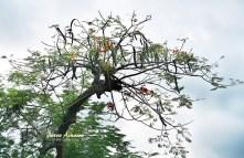 04-tree