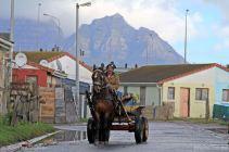 Cart-Horses-Adams-Aug2013 (2)