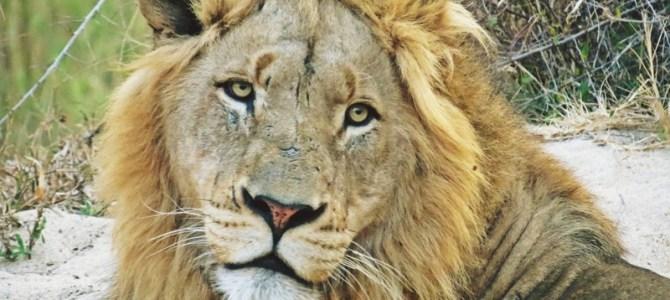 Safari Lodge, Ulusaba Game Reserve