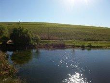 Asara-Wine-Estate (2)