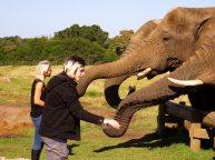 Elephant-Sanctuary