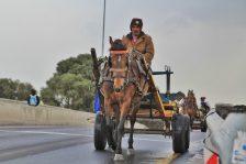 Cart-Horses-Adams (23)