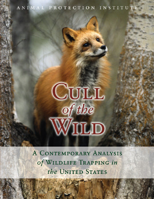 Cull of the Wild a Contemporary Analysis of Wildlife Trapping in the United States