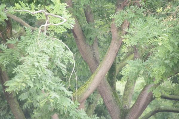 Pour la beauté de la discussion, imaginez qu'il y ait un oiseau dans l'arbre.
