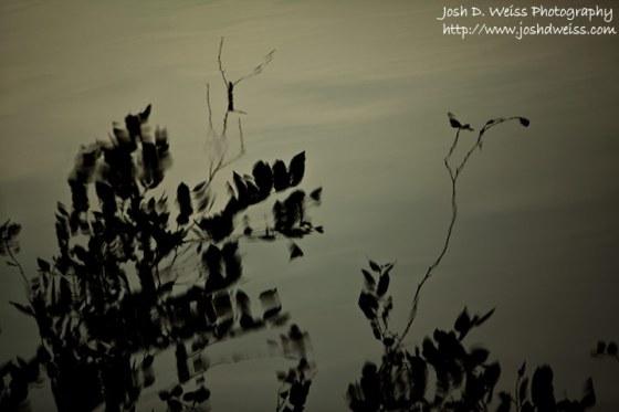 090617_JDW_Piedmont_0084