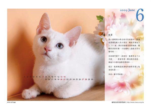 【愛心】流浪貓狗義賣月曆,狗狗的在下面 @ 塔羅貓玩塔羅 :: 痞客邦