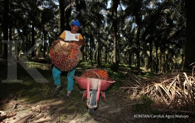 Paradise Papers: Menguak hutan gundul di Indonesia