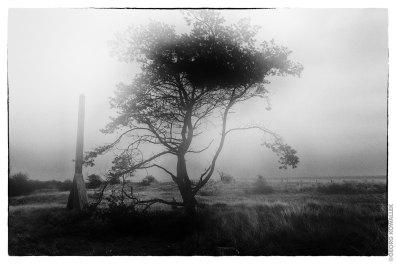 Grömitz, Baum im Nebel