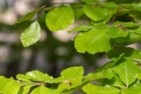 Blätter mit Haaren