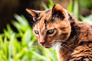 Eine Katze blickt nach hinten