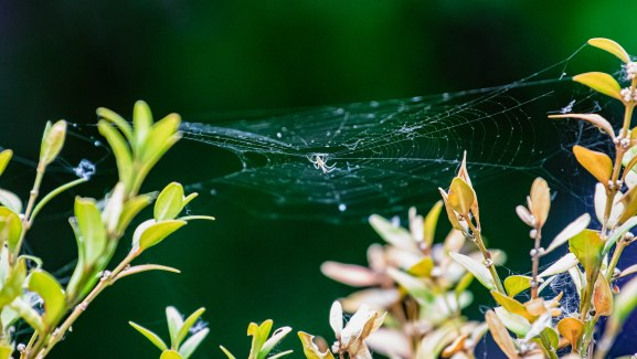 Kleiner Spinner