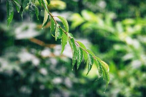 Regenfreitag 1