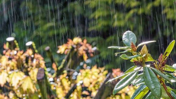 Wetter 1