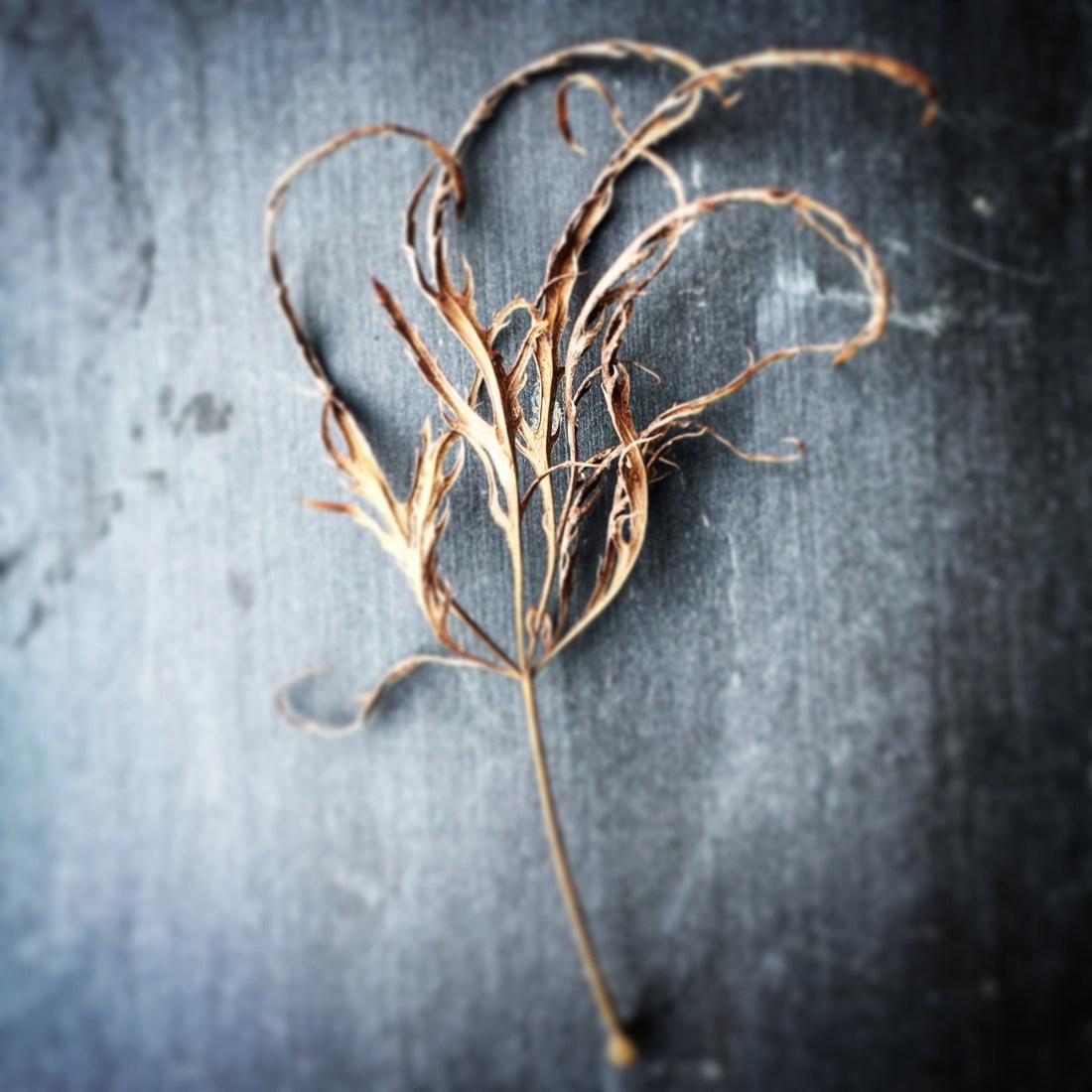 Still Life: Crunchy Leaf