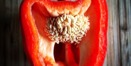 Still Life: Red Pepper