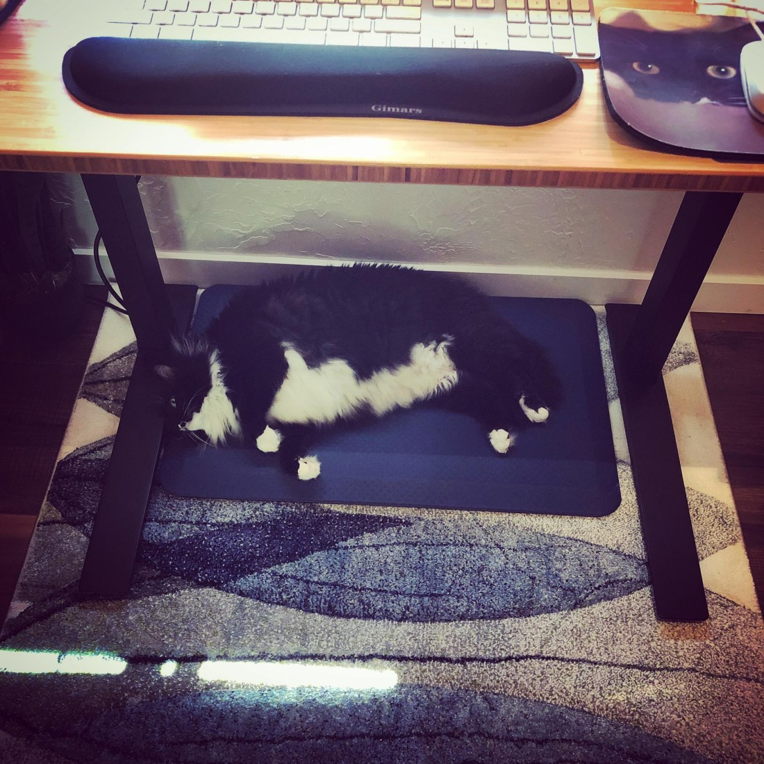 Rocky under my desk