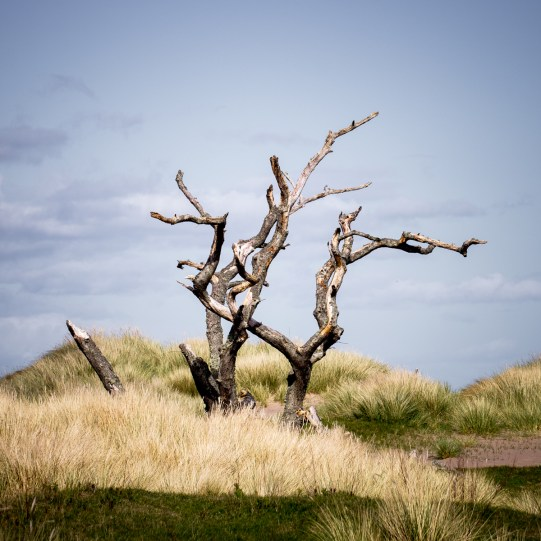 Tentsmuir Skeleton Ⅳ