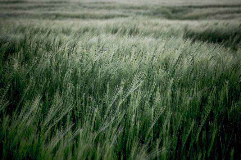 Fields of Green Ⅰ
