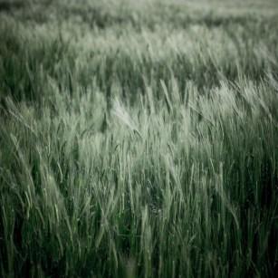 Fields of Green Ⅱ