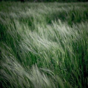 Fields of Green Ⅴ