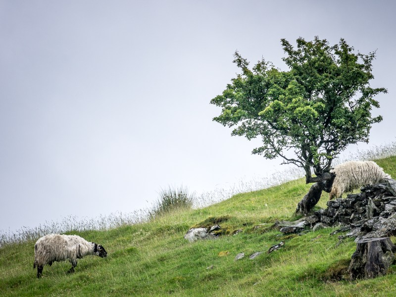 Cumbrian Scenery III