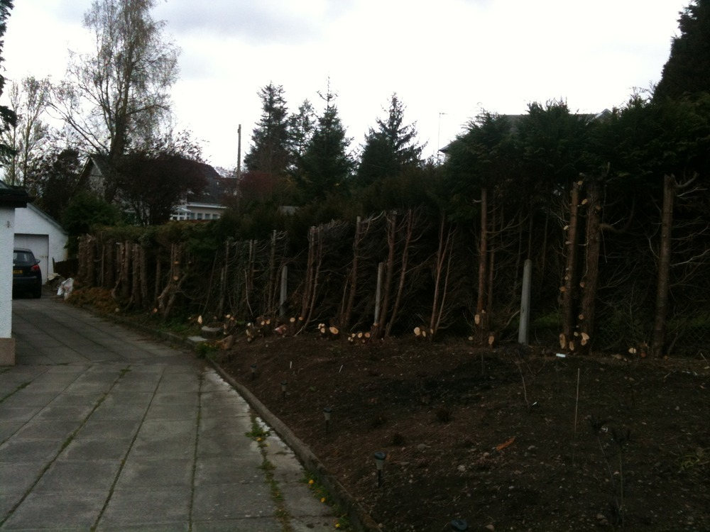 Remove 80m of Leylandii hedge and replace with fencing  Garden Maintenance job in Stirling