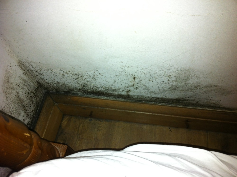 kitchen gutter wood chairs removal of black mould in bedroom and identify cause ...