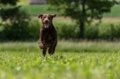 Hunde-Shooting
