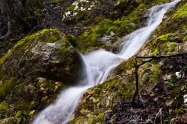 Wald 01