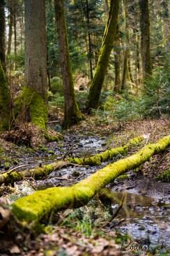 Wald 03