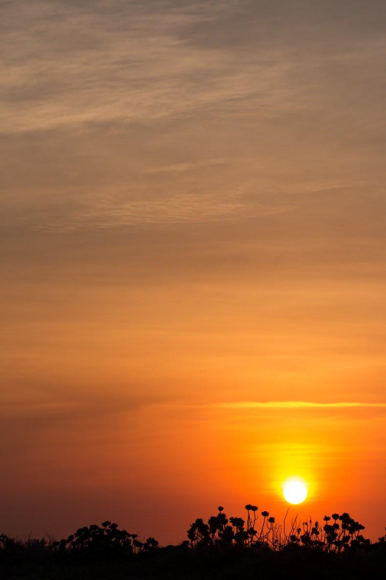 Lever de soleil avec fleurs en silhouette en avant-plan