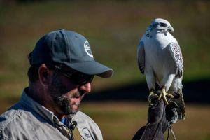 Hawk Watch. Image by T.M. Schultze.