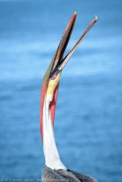 Stretching Pelican, by Shuwen Lisa Wu