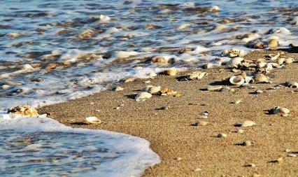 Barbara Whitman - Satellite Beach Shell Pool
