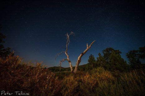 Peter Tellone - Dead Tree, Laguna Mountains