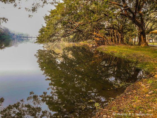 Ben Radhakrishnan - Trees_In_Reflective_Meditation_With_Water