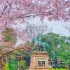 [東京旅遊推薦] 上野恩賜公園賞櫻花、阿美橫町、明治神宮@附成田機場到東京市區交通資訊