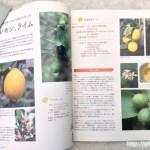 鉢で育てる果樹解説1