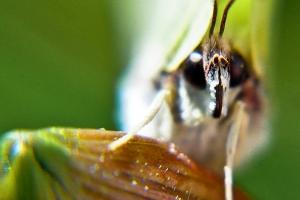 motyle-w-polsce