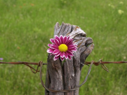 Flower on a Post