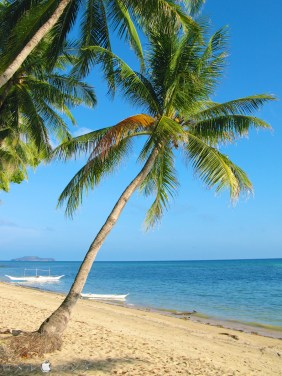 Coco Verde Beach 019
