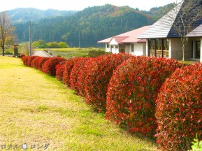 Shirakawa Sekinomori Park 013
