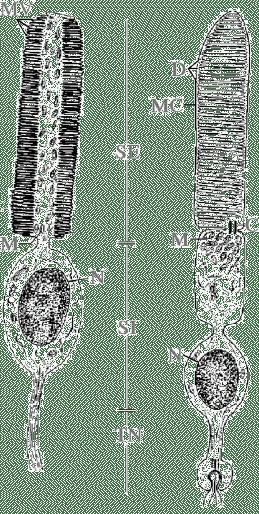 Non-Visual Photoreception in Invertebrates