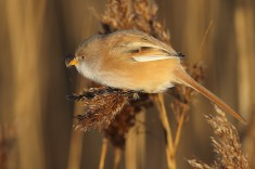 Notice the seeds in her beak.