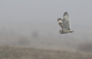 The background does get rather attractive in foggy weather - but the lack of light means high ISO settings and blurred wingtips.
