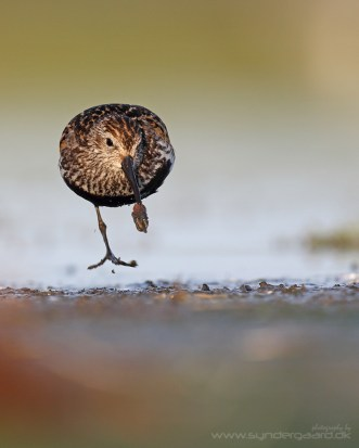 What looks like a foot in full stride is actually a rag worm, wound into a knot.