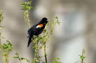 Bird call.