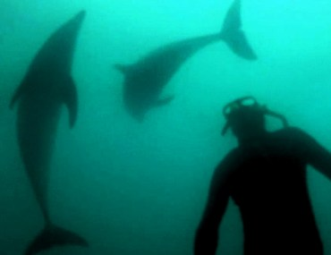 Snorkeling with dolphins in New Zealand.
