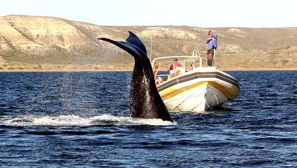Wildlife In Patagonia Valdes Peninsula Wilderness