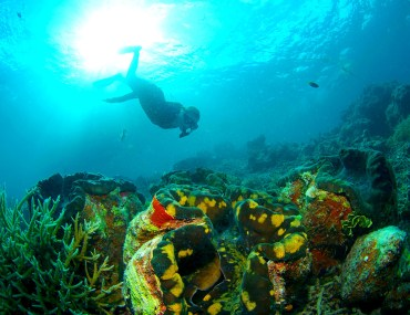 Palau's giant clams and snorkler